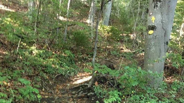 Oznaka na drevesu po gozdi poti.